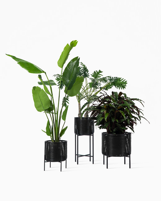 vincent-Sheppard-Ivo-plant-stands